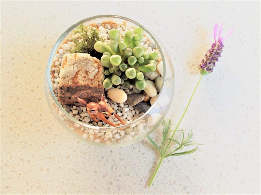 tiny terrarium
