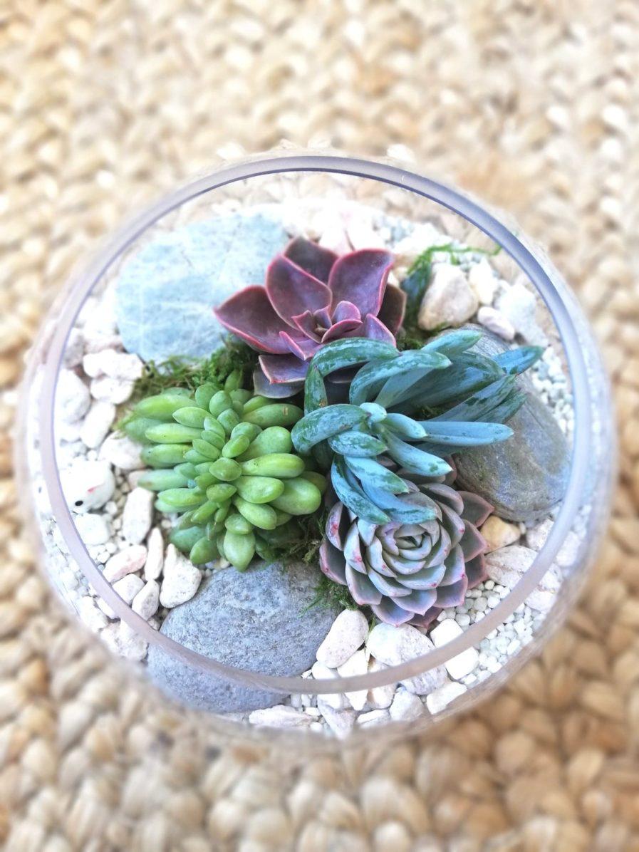 fish bowl terrarium