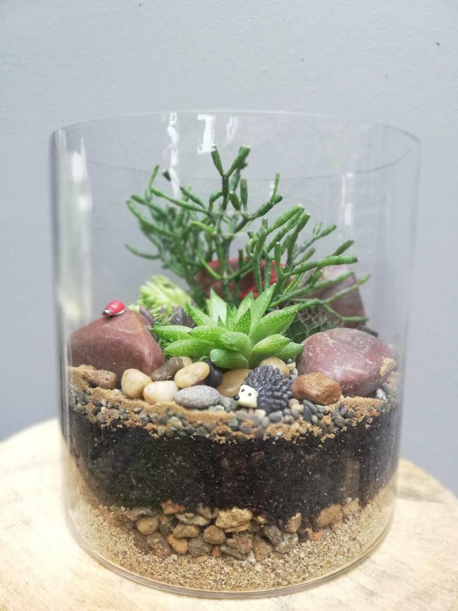 Cylinder terrarium