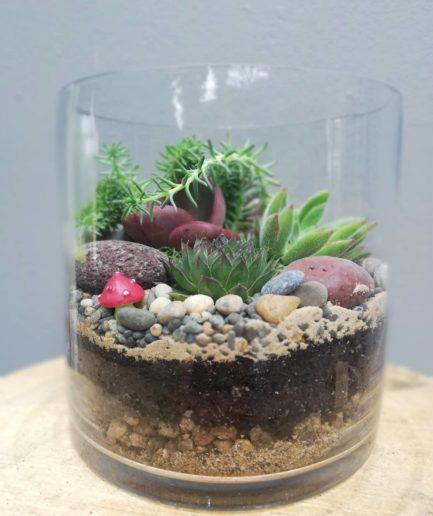 Small Cylinder Terrarium