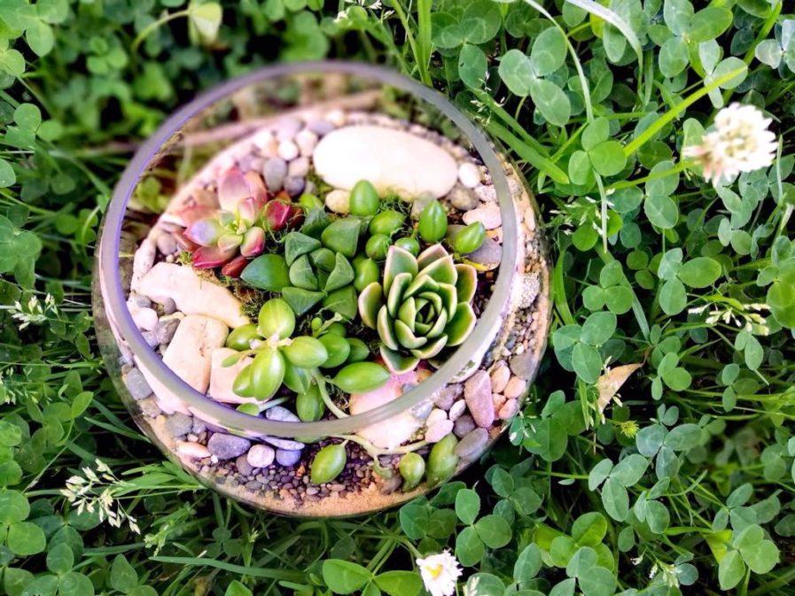 medium fish bowl terrarium