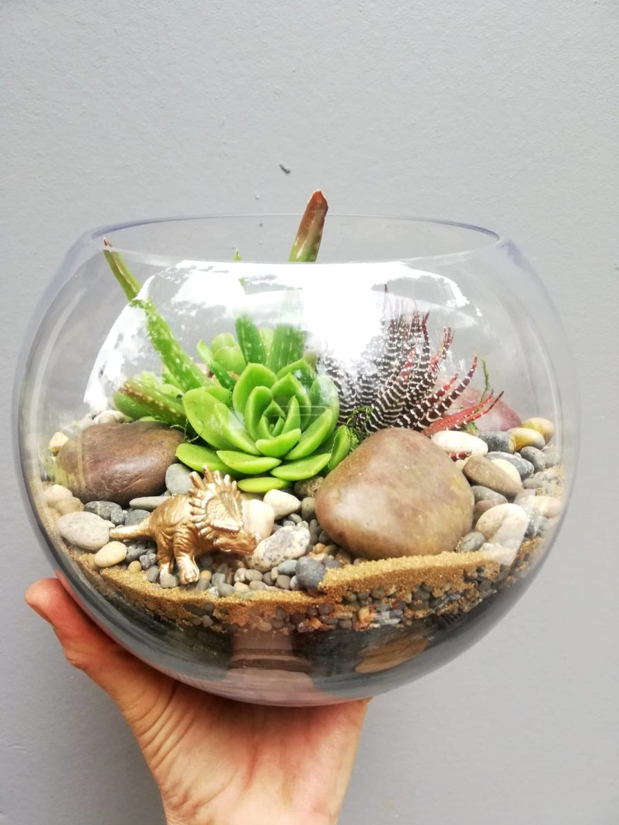 Large fishbowl terrarium