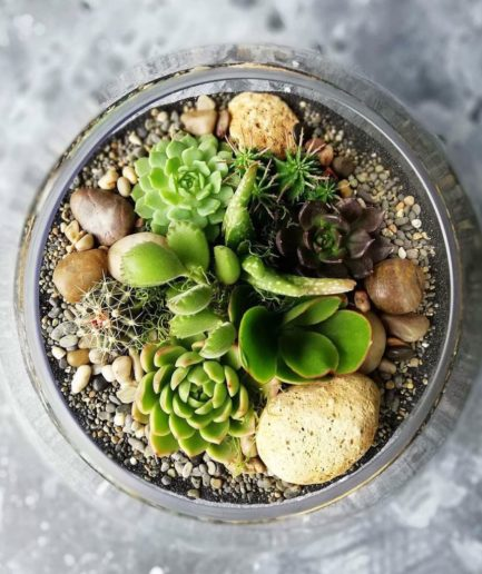Extra Large Fish Bowl Terrarium