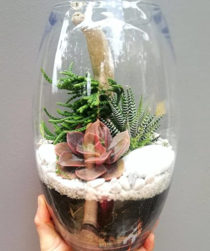 Belly vase terrarium