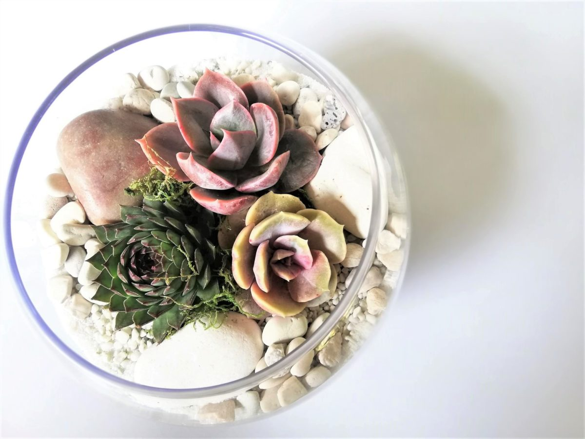 Small Fish Bowl Terrarium Vidabela Terrariums And Gift Boxes