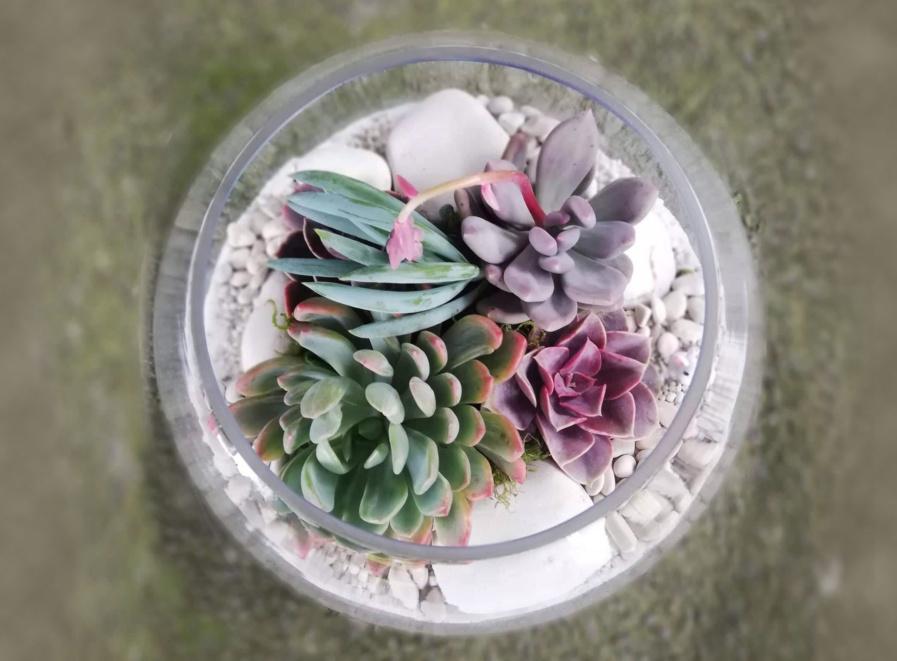 succulent-terrariums