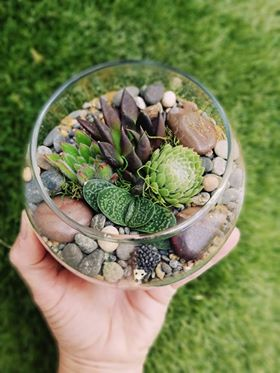 Mini fish bowl terrarium