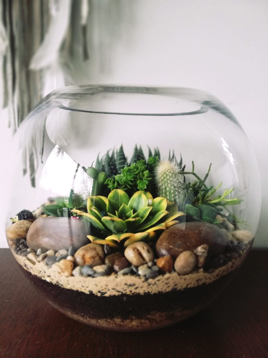 Giant Fish Bowl Terrarium Vidabela Terrariums And Gift Boxes