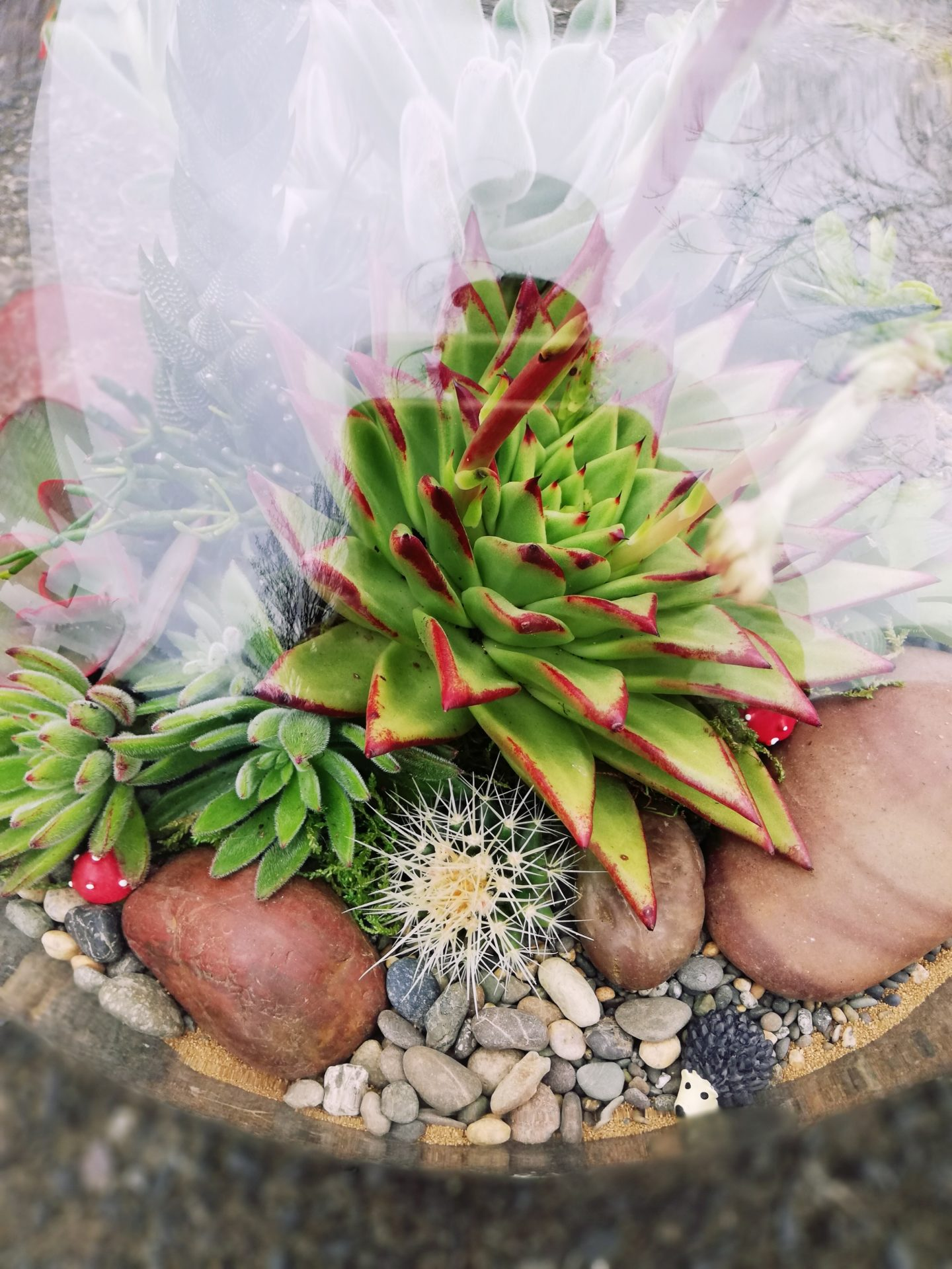 bright terrarium
