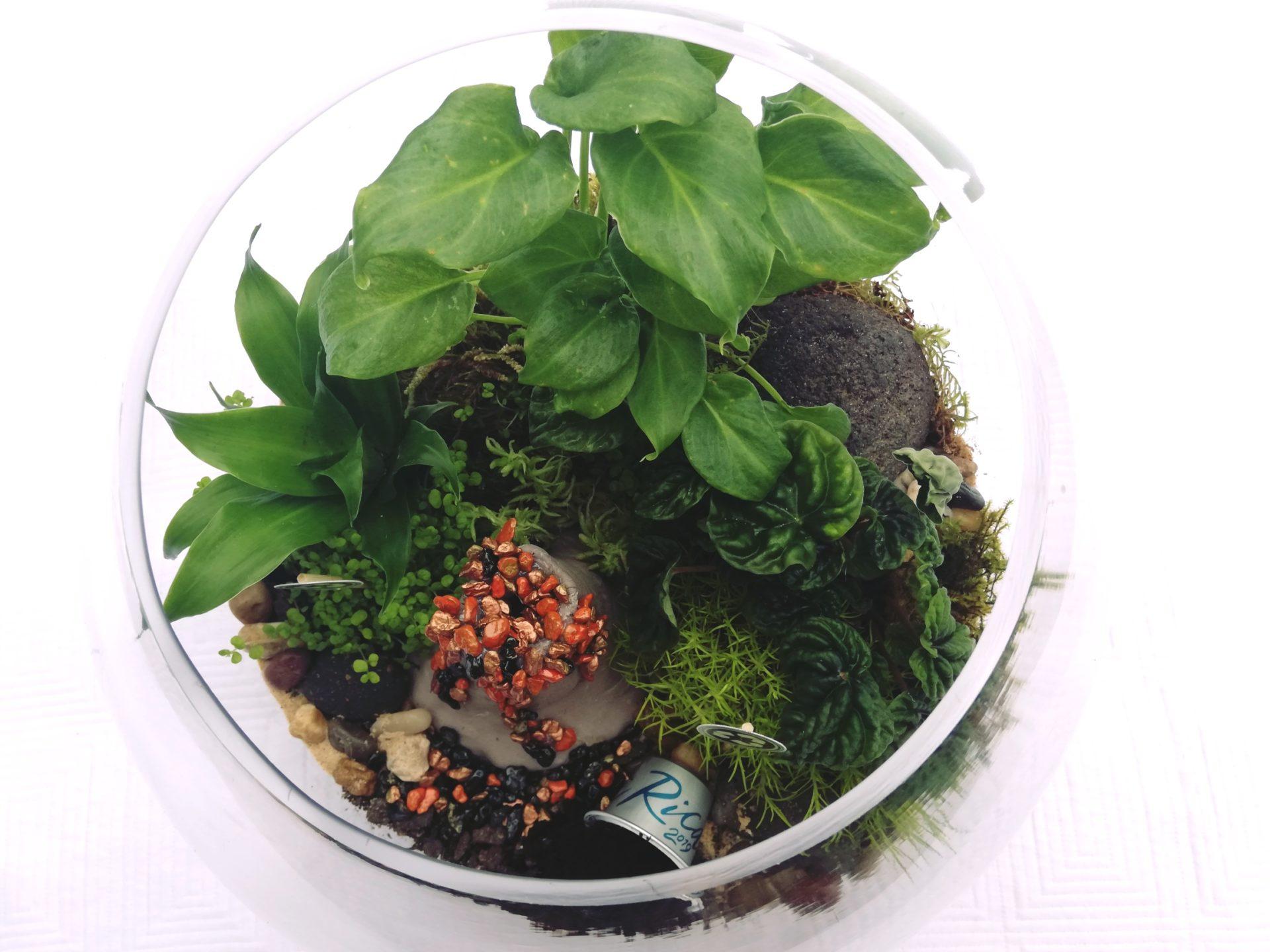 custom terrarium