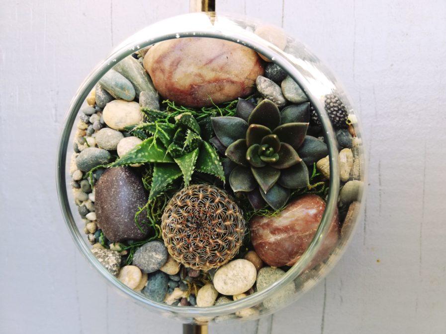 Mini Fish bowl terrarium
