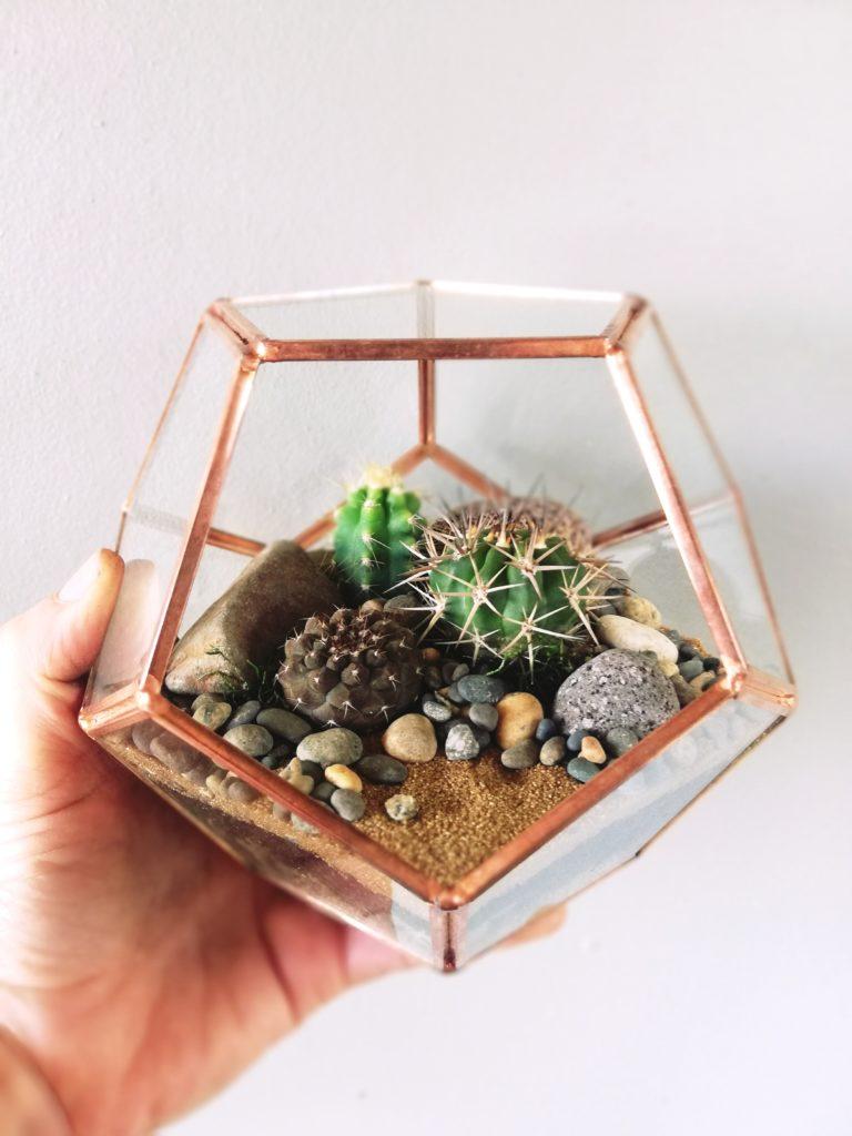 Hexigon terrarium