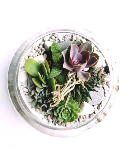 fishbowl terrarium
